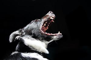 dog bite image